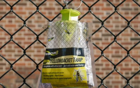 Maintenance staff place yellowjacket traps, such as the one pictured, around the football field.